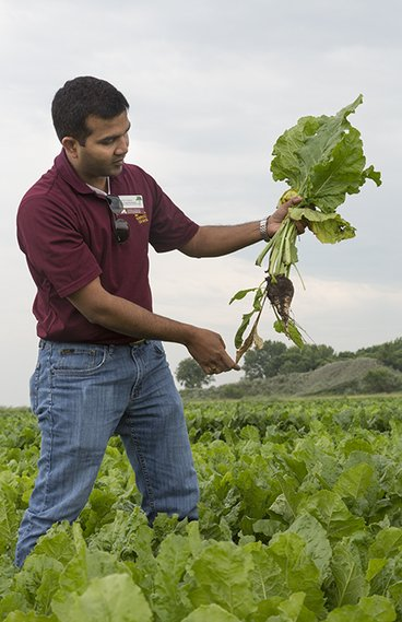 Man holding a sugarbeet in a field of sugarbeets